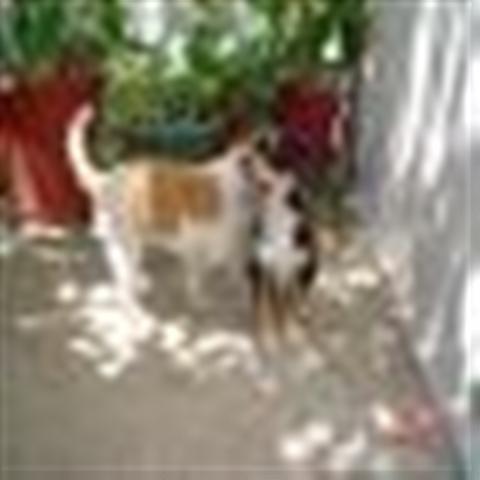 GPAR :: Grupo de Protección Animal de Rute